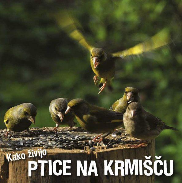 Ivan Esenko: Kako živijo ptice na krmišču