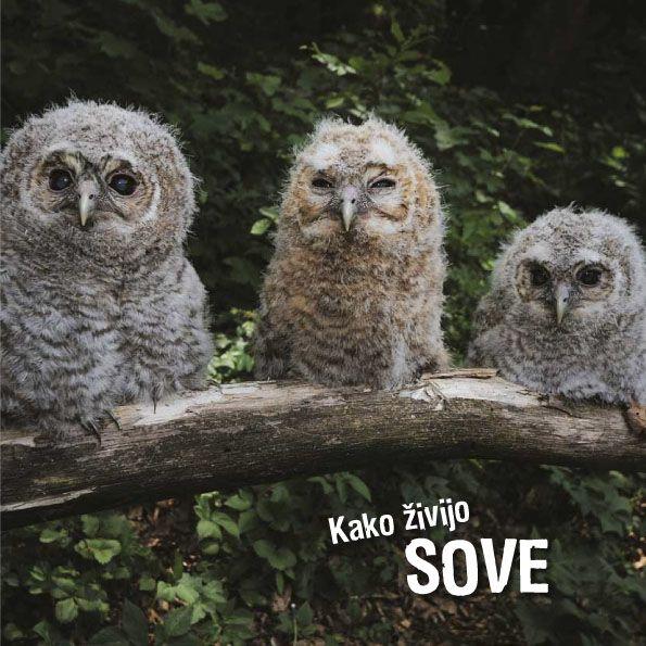 Ivan Esenko: Kako živijo sove