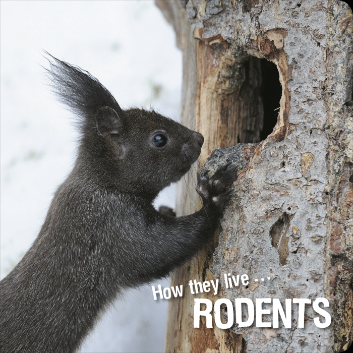 Ivan Esenko: Rodents