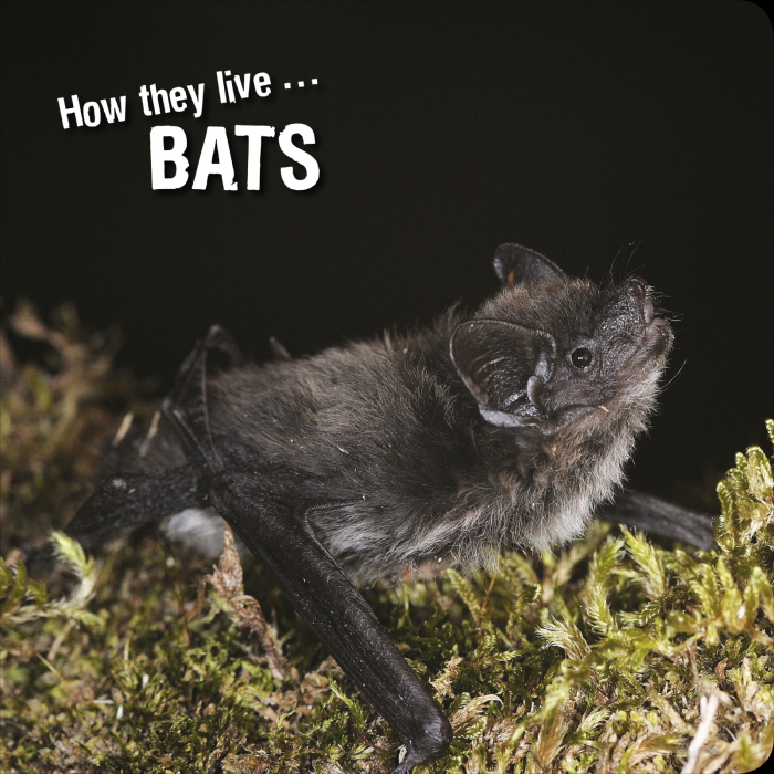 Ivan Esenko: Bats