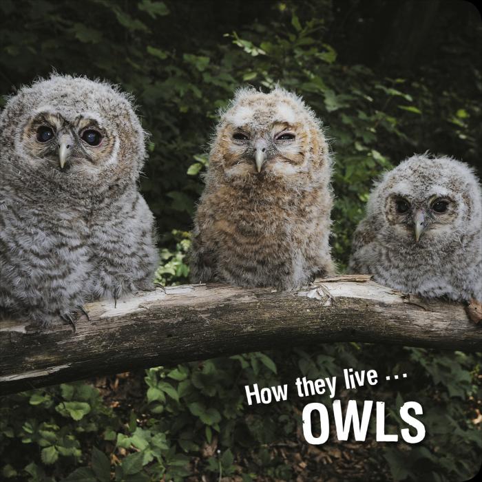 Ivan Esenko: Owls