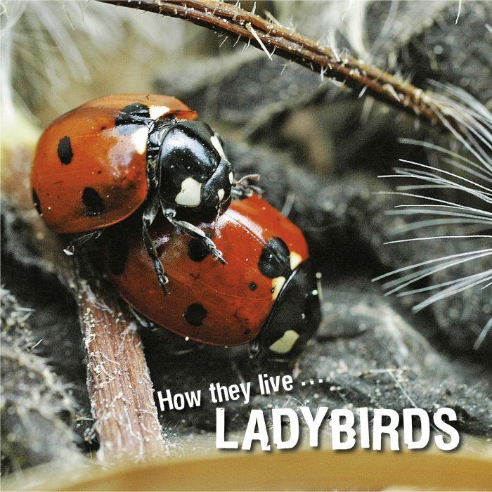 Ivan Esenko: Ladybirds