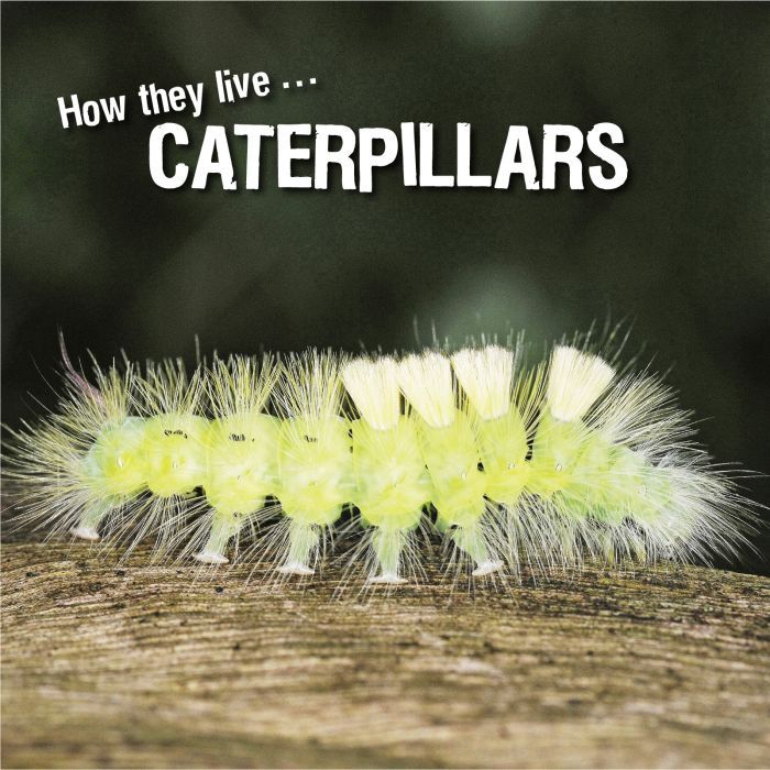 Ivan Esenko: Caterpillars