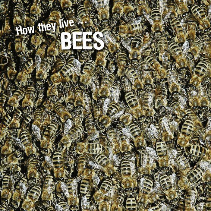 Ivan Esenko: Bees